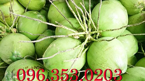 Đại lý dừa lớn nhất bến tre cung cấp dừa tươi giá sỉ