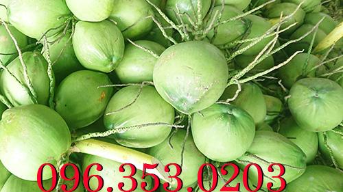 Đại lý dừa xiêm xanh lớn nhất bến tre cung cấp số lượng lớn