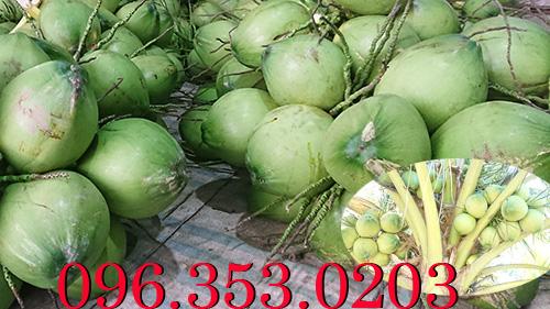 Cần mua dừa tươi số lượng lớn tại bến tre