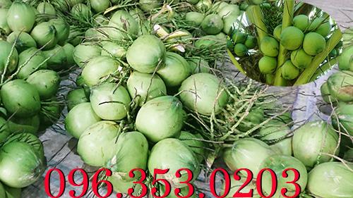 Tỉnh nào nhiều dừa tươi nhất?